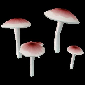 Tinted-Burst Fungus