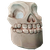 Spooky Skull Lantern
