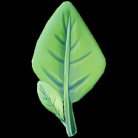 Fleshy Leaf