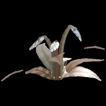 Cloneflower